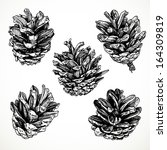 Sketch Drawing Pine Cones On...