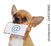 Red Chihuahua Dog With Post...