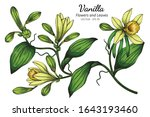 vanilla flower and leaf drawing ... | Shutterstock .eps vector #1643193460
