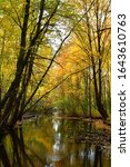 Daytime photo of Cobus Creek in Elkhart, Indiana in autumn with surrounding forest and beautiful fall colors in the trees