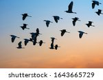 Flock Of Birds Fly To Earn A...