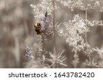Shaggy Bumblebee Sitting On...
