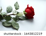 One Beautiful Red Rose With...