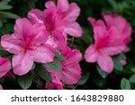 Blurred Floral Background....