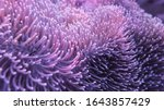 Colorful Sea Anemones On The...