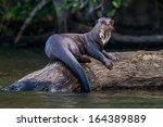 giant otter standing on log in...   Shutterstock . vector #164389889