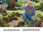 Portrait Of Male Farmer...