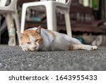 A Red And White Adult Cat With...