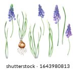 Watercolor Isolated Purple Blue ...