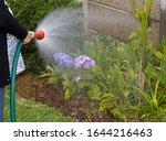 Woman Holding Hosepipe Waterin...