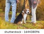 Stock photo senior couple walking their beagle dog in autumn countryside 164438096