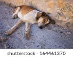 Abandoned Dog Lying On The...