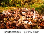 Heap Autumn Leaves In The...