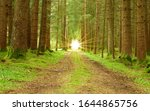 Very Green Forest Path With A...
