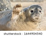 High Five. Cute Seal Waving....