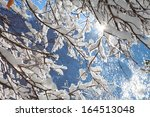 Snowy Branches On The...