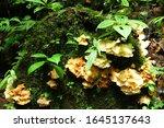 Fungus On The Tree In Santa...