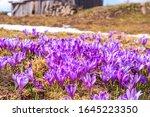 spring background   glade of... | Shutterstock . vector #1645223350