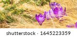 spring background   view of the ... | Shutterstock . vector #1645223359