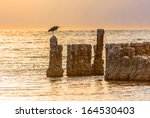 A Bird Sitting On A Post At The ...