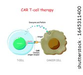 cancer immunotherapy. t cell... | Shutterstock .eps vector #1645311400