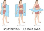 anatomical planes of the body ... | Shutterstock .eps vector #1645354666
