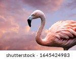 American Flamingo. The American ...