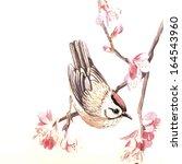 Vector Watercolor Spring Bird....