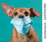 Dog Face In Medical Mask...