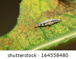 big lacewing flies larvae  ... | Shutterstock . vector #164558480