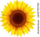 sunflower isolated  vector... | Shutterstock .eps vector #1645795750