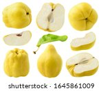 Isolated Quince Fruits....