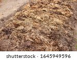 A Pile Of Manure Spread Out On...