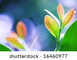 Fresh leaves - stock photo