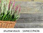 Heather Flowers In Basket On...