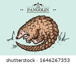 vector isolated pangolin  cute... | Shutterstock .eps vector #1646267353
