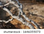 Light On Dry Grey Twigs Of A...