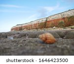 Small photo of Contrasting orange and white cliffs on rocky beach with interesting lines and colour contrasts and blurred shell in foreground