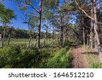 Bicycle Path Among Pine Trees ...