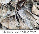 Photo Of Dry Banana Leaves