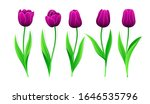 Collection Of Vector Purple...