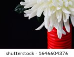 White chrysanthemum in a red...