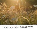 grass in back light | Shutterstock . vector #164672378