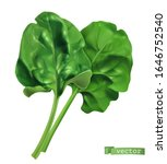 spinach  vegetable greens. 3d... | Shutterstock .eps vector #1646752540