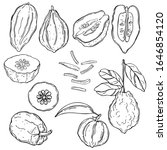 hand drawn citron.  vector... | Shutterstock .eps vector #1646854120