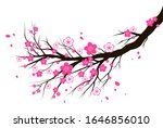 spring blooming cherry or... | Shutterstock .eps vector #1646856010