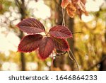 Brightly colored autumn foliage....