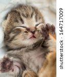 Stock photo sleeping british baby kitten 164717009