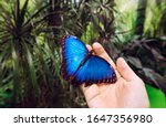 Person Holding Landed Morpho...