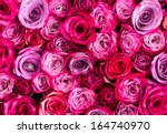 Stock photo red rose 164740970